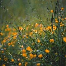 Pollenszezon