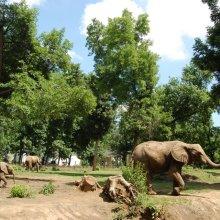 Jack elefánt
