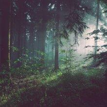 Erdővadítás