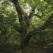 Tilos erdő